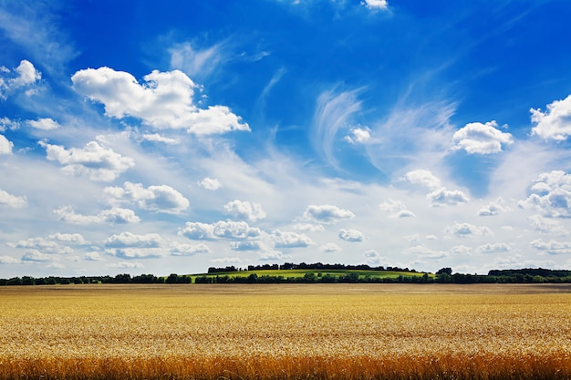 Summer field against the blue sky. beautiful landscape. Free Photo