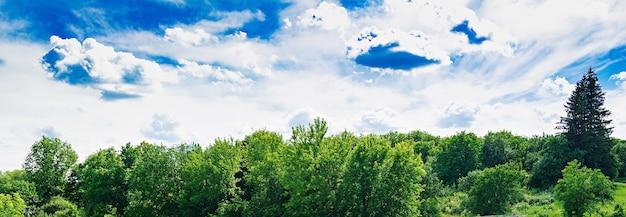 青い空を背景に夏の畑。美しい風景。 無料写真