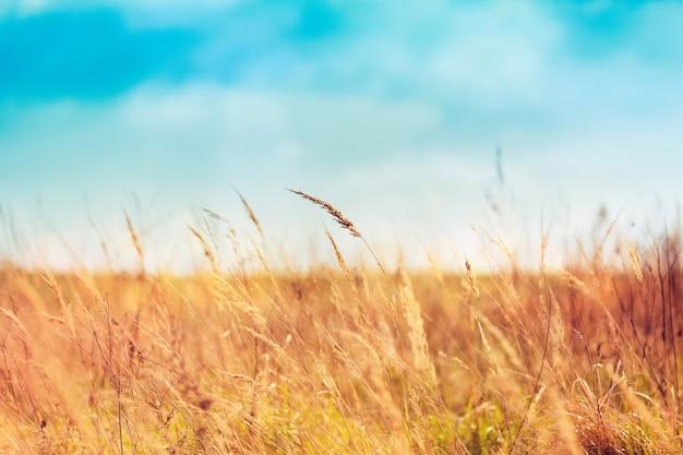 아름 다운 날에 여름 잔디 무료 사진