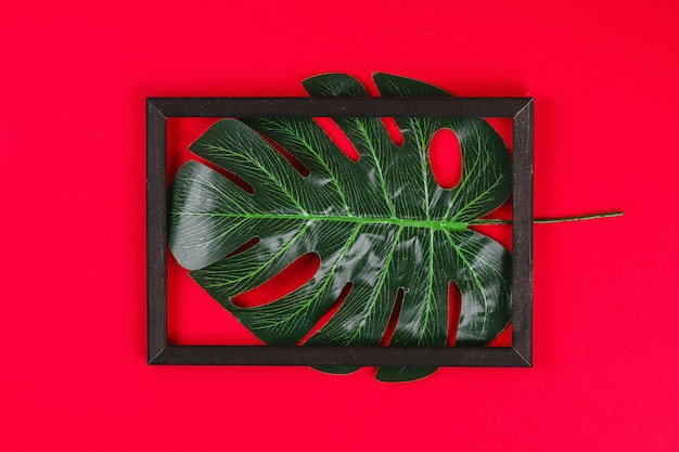 Summer ideas concept tropical leaf white black frame border on red background. Premium Photo