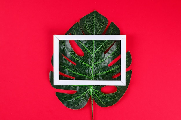 Summer ideas concept tropical leaf white black frame border on red surface. Premium Photo