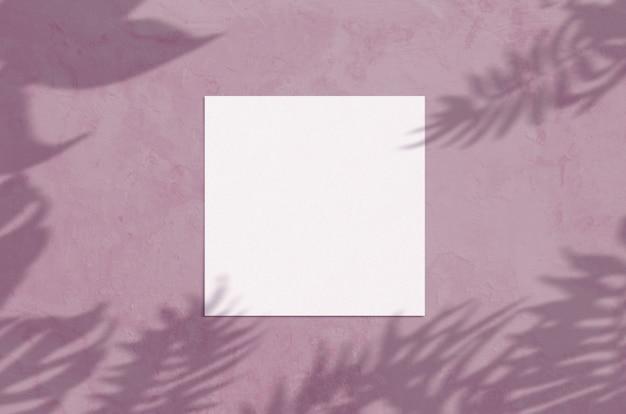 여름 현대 햇빛 문구 프리미엄 사진
