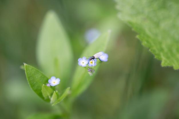 Лето или весна природа красивый фон. маленькая муха на голубом цветке. мягкий фокус Premium Фотографии