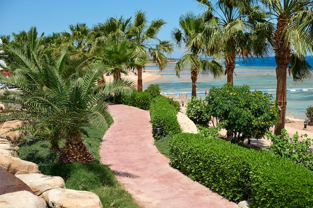 Summer palm trees on the coastal promenade overlooking the red sea Premium Photo