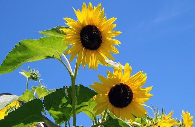 summer flower retro sunshine - photo #19