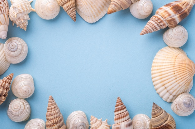 Summer texture, copy space, seashell top view, blue background Premium Photo