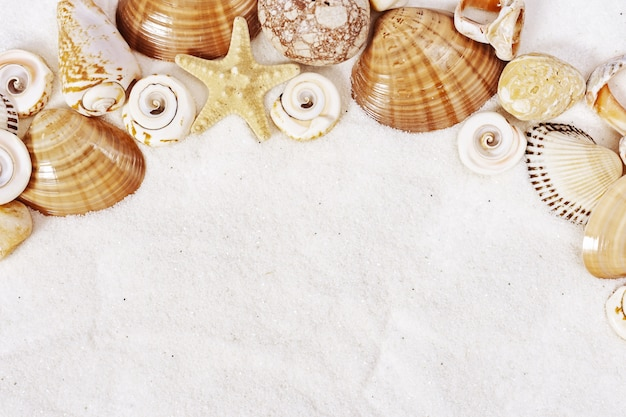 Summer time concept with seashells, star, sea pebbles on white sand background. Premium Photo