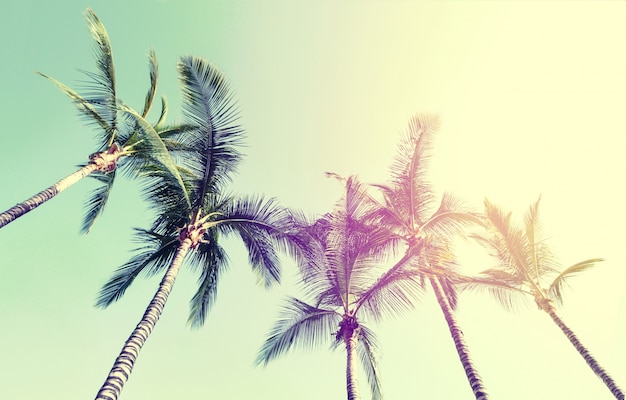 Summer travel vacation concept. beautiful palms on blue sky background. toning. Free Photo