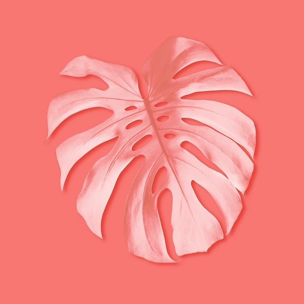 Summer tropical monstera foliage on coral color background Premium Photo