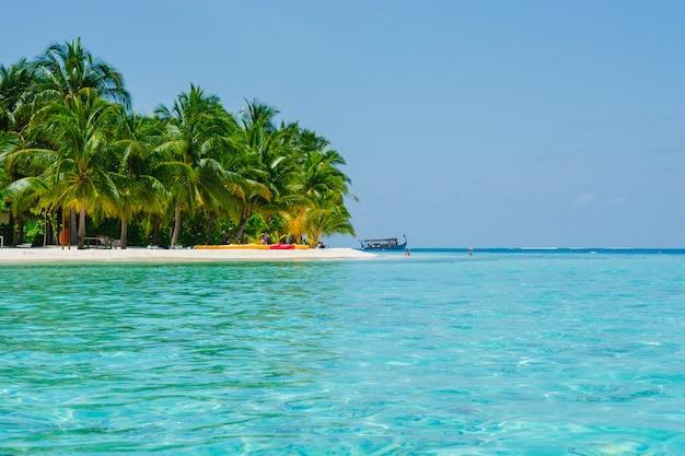 sun day coconut palm caribbean Free Photo