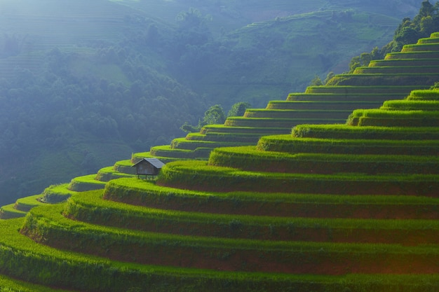 Sun light on terraces rice fields. rice fields in northwest of vietnam. mu cang chai, landscape terraced rice field near sapa, Premium Photo