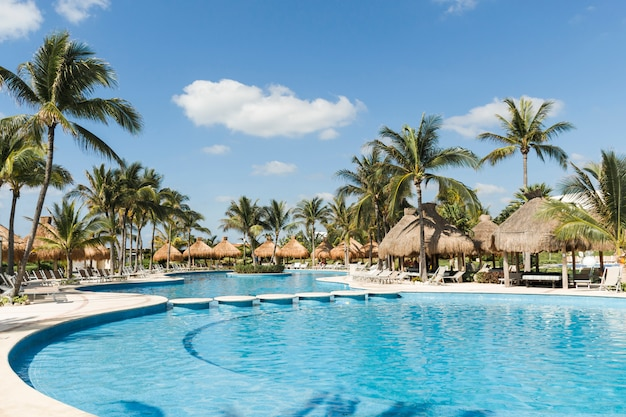 Sun loungers near palms and swimming pool in sunny day Free Photo