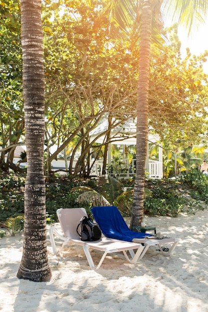 Sun loungers between trees on sand Free Photo