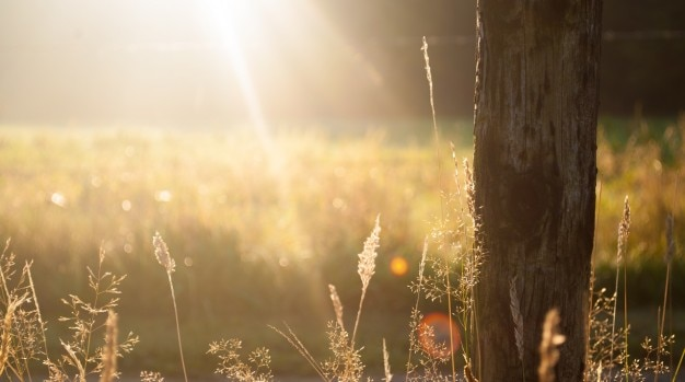Sun rays in the field Free Photo