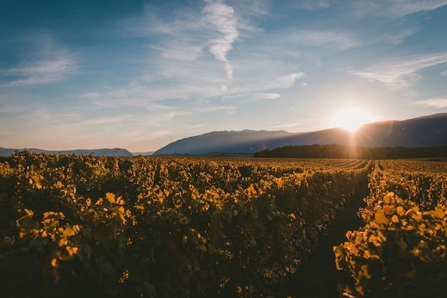 山の後ろに沈む夕日とブドウ畑を光で覆う 無料写真
