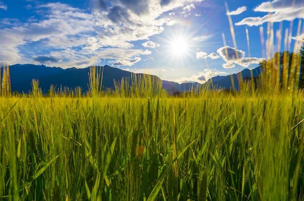Солнце светит над красивым зеленым полем с высокими травами и горами на горизонте Бесплатные Фотографии