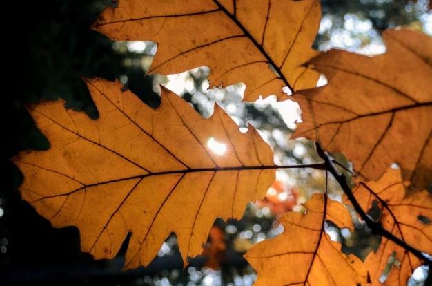 Sunは、葉を通して輝く 無料写真