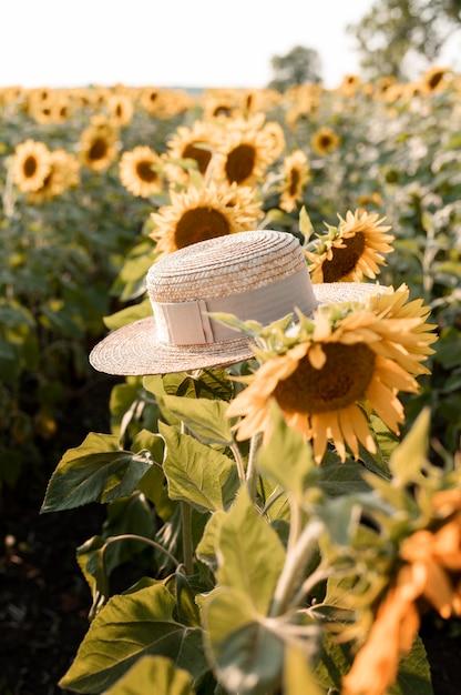 夏の帽子とひまわり畑 無料写真