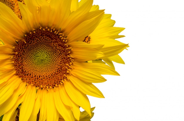 Sunflower floral border with copy space, festive. Premium Photo