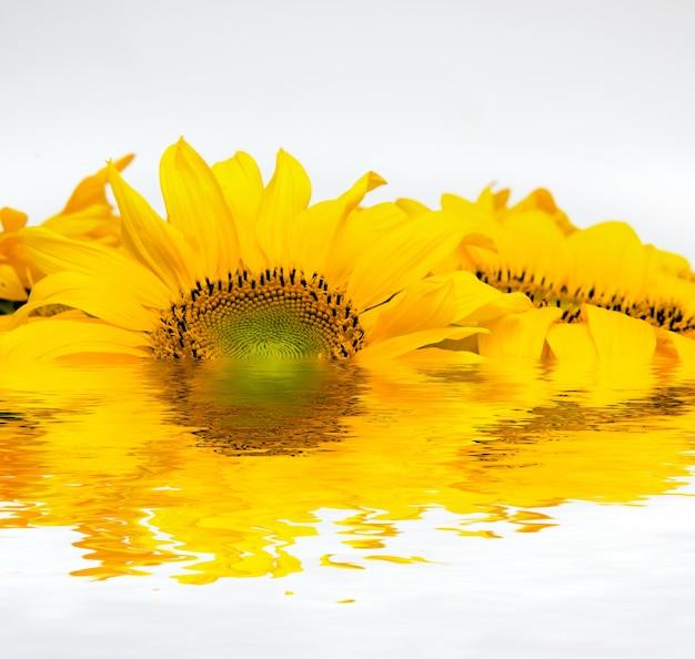 Sunflower put into water Free Photo
