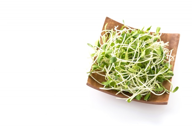 Sunflower sprouts Free Photo