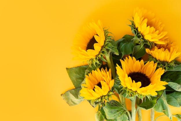 Подсолнухи, изолированные на желтом Premium Фотографии
