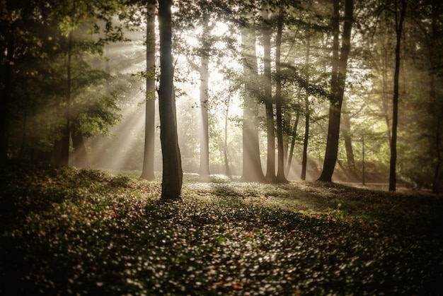 Sunlight covering the trees in the forest in autumn Free Photo