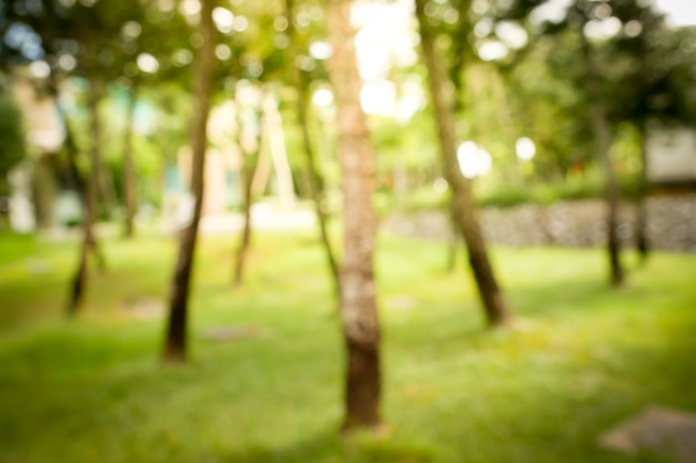 Sunny Abstract Green Nature Background Blur Park With Bokeh Light