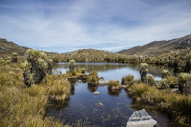 A sunny day in sierra nevada del cocuy Premium Photo
