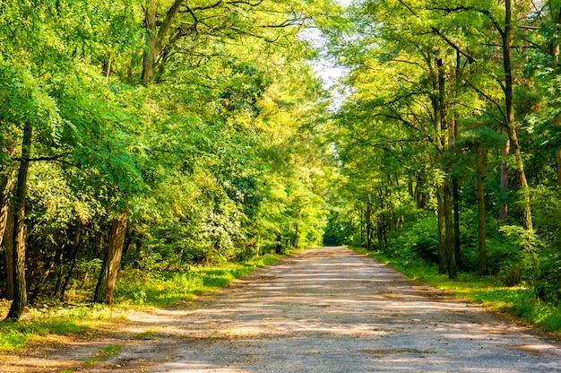 Strada soleggiata nella foresta circondata dal verde degli alberi in estate Foto Gratuite