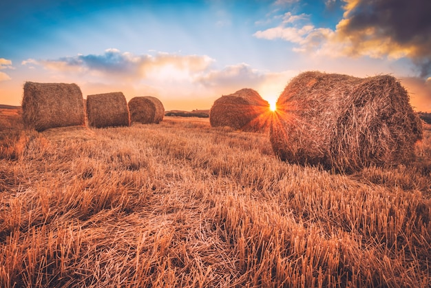Sunrise over a field covered with hay bales. Premium Photo