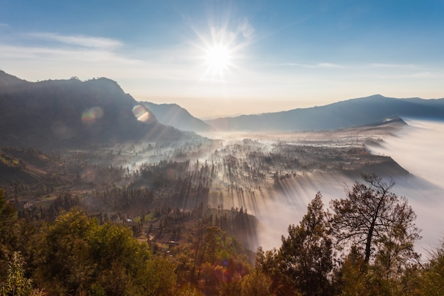 Sunrise in forest Premium Photo
