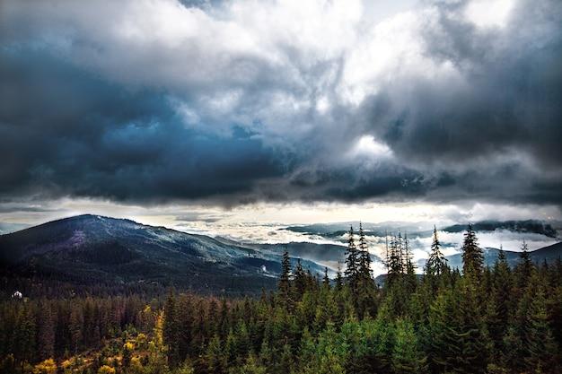 カルパティア山脈の美しい森の日の出 Premium写真