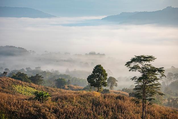 日の出の霧は田舎の冬の霧の風景の森で山の背景をカバーします Premium写真