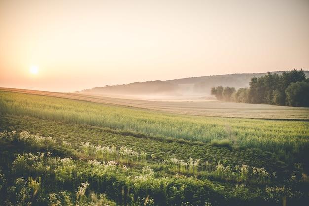 농지에 일출 무료 사진