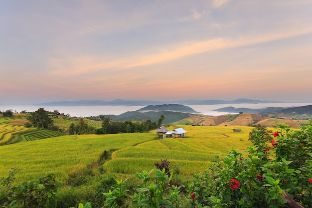 Sunrise at terraced paddy field in mae-jam village , chiang mai province , thailand Premium Photo