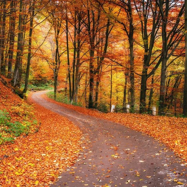 Sunset in the autumn forest Premium Photo