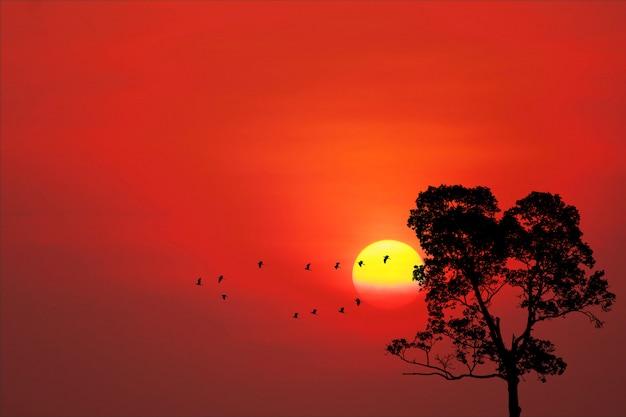 夕日に戻るシルエット鳥が空を飛ぶ家と木 Premium写真