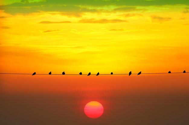 シルエット暗い赤オレンジ色の夕方の空に夕日と電力送電線の鳥 Premium写真