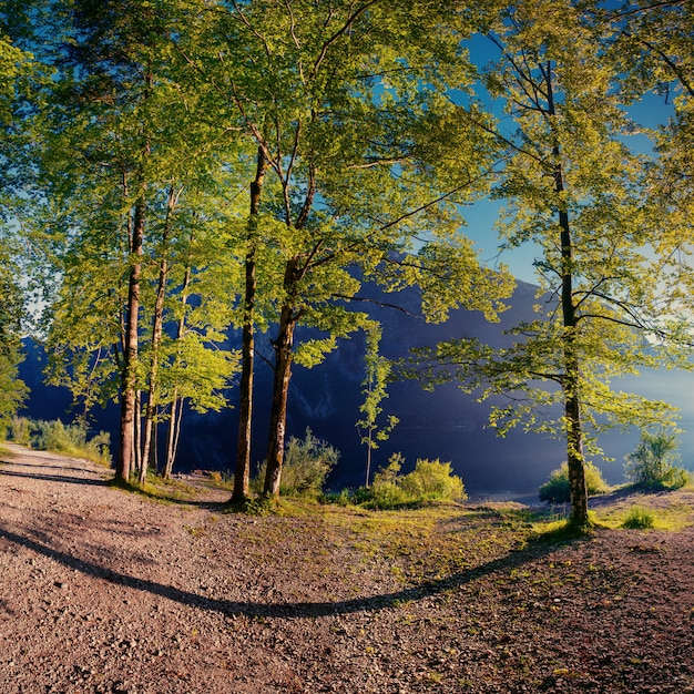 Закат разрывается между деревьями. Premium Фотографии