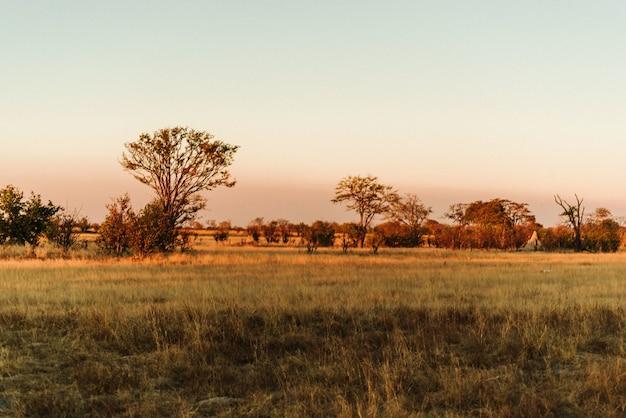 ジンバブエのワンゲ国立公園の夕日 無料写真