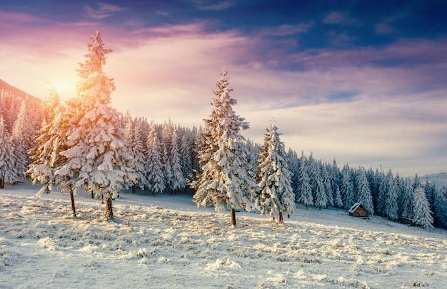 冬の霜で雪に覆われた木に沈む夕日 Premium写真