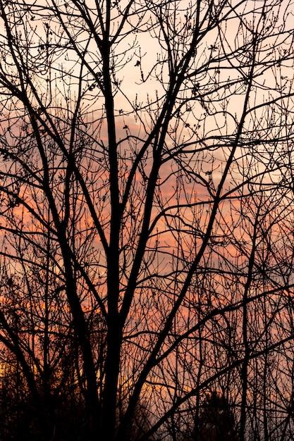 空の木を通して夕焼け空 無料写真