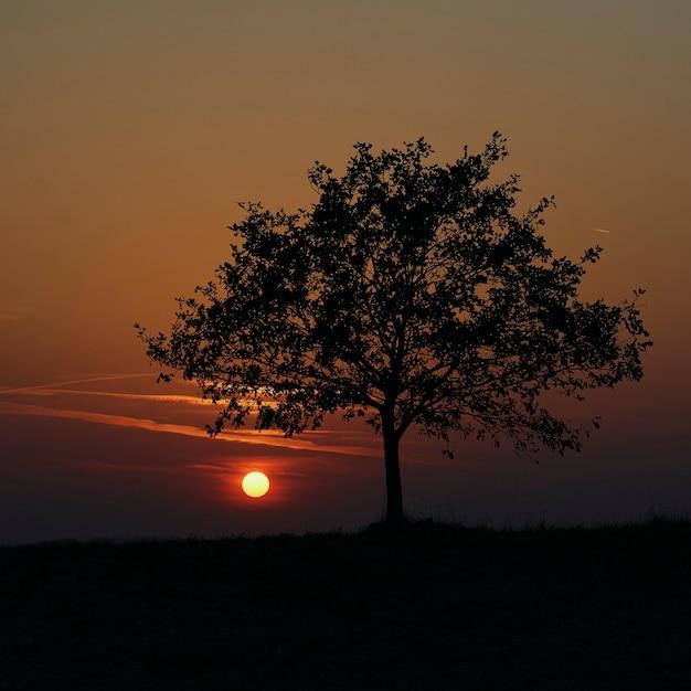 Sunset Premium Photo