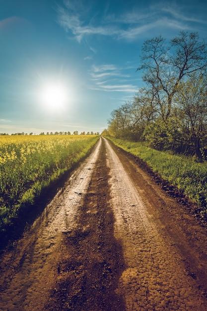 Sunshine and rural road in bakota Premium Photo