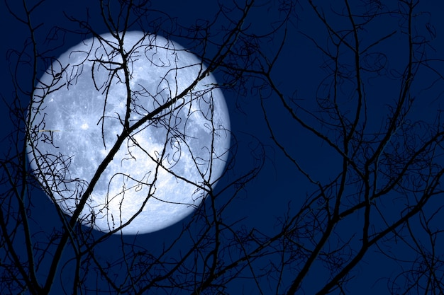Super egg moon back on silhouette plant and trees on night sky Premium Photo