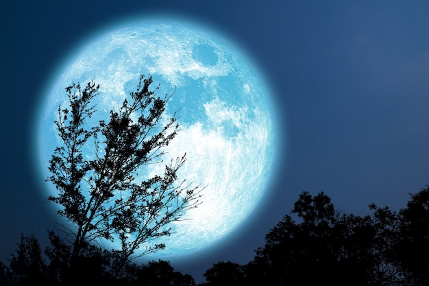 Super grain blue moon silhouette tree in field on night sky, elements of this image furnished by nasa Premium Photo