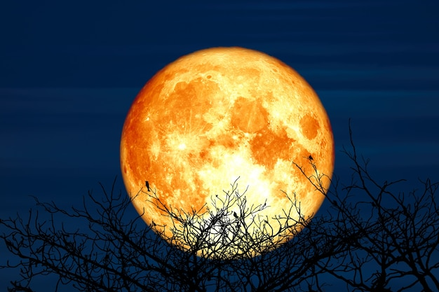 Super sturgeon moon and silhouette coconut tree mountain in the night sky, elements of this image furnished by nasa Premium Photo