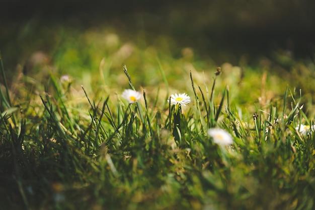 Макрофотография выстрел из цветов в травянистых местах в suuny день в парке золотые ворота в sf Бесплатные Фотографии