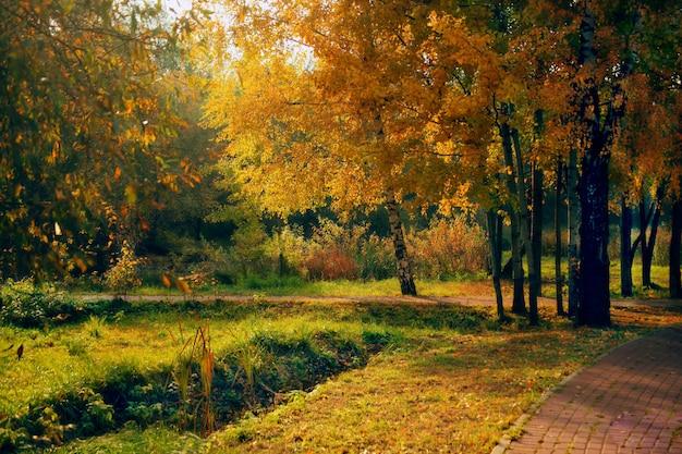 ロシアのsviblovo公園の木の真ん中にある経路の美しいショット 無料写真